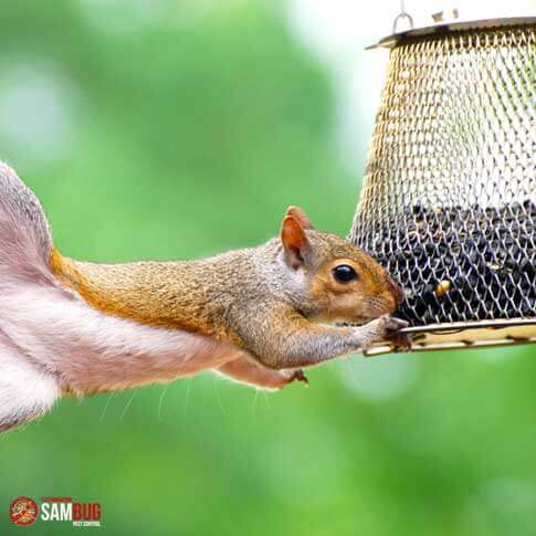 Écureuils : prévention et capture