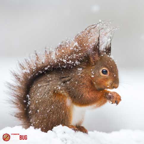 Éloigner les écureuils nuisibles