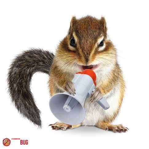 Exterminateur d'écureuils