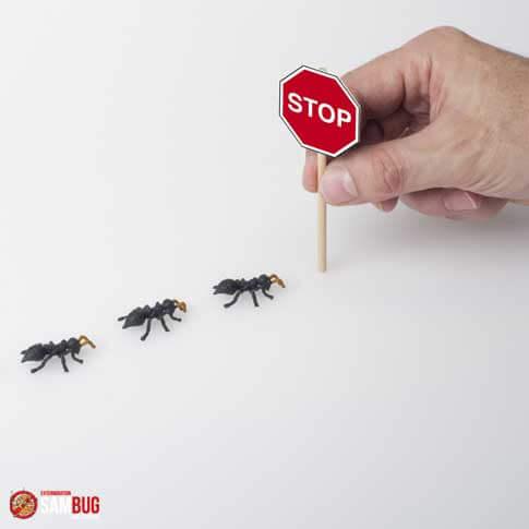 Exterminateur de fourmis charpentière