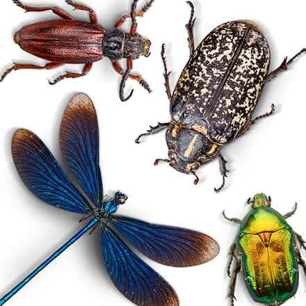 Insectes à Charlemagne